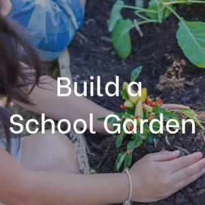 healthy school garden